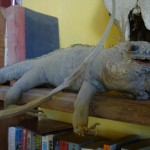 Weird Stuffed Iguana In Casa Dracula